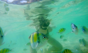 Snorkelling at Phi Phi, Thailand.