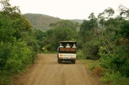 Safari, Hluhluwe, SA